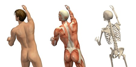 Anatomical overlays - man seen from back view - turning and reaching up. These images will line up exactly, and can be used to study anatomy. 3D render.