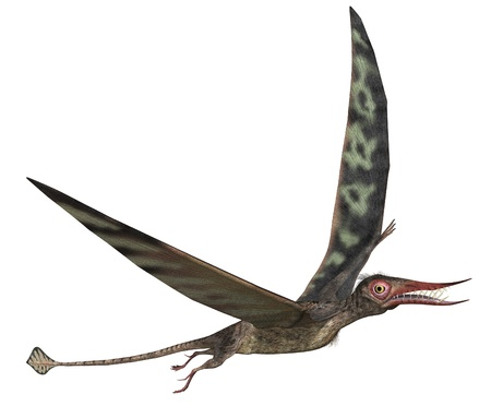 The Rhamphorhynchus dinosaur (pterosaur)  lived during the Jurassic Period - 3d render.