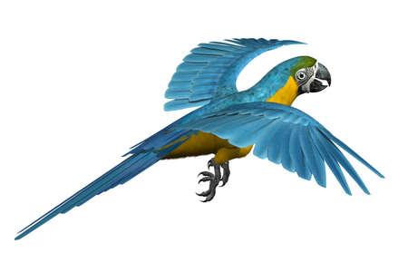 3 D レンダリングの飛行のコンゴウインコ
