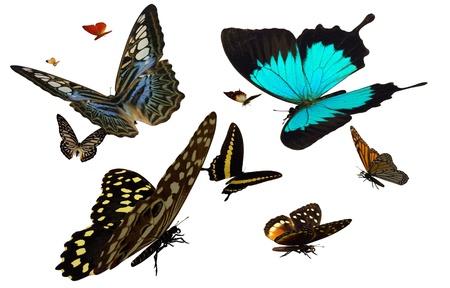 나비 - 나비의 다양한 묘사 3D 렌더링.