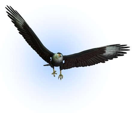 CaraCara Vulture in Flight - 3D render Stock Photo - 11711065