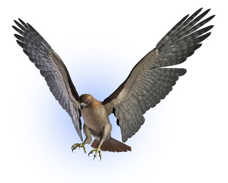 Red Tailed Hawk getting ready to land - 3D render. Reklamní fotografie