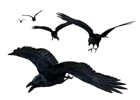 Crows Flying - rendering 3D
