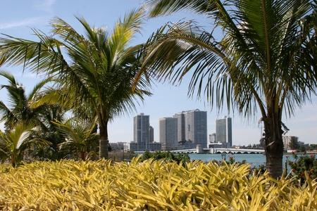Miami Hotels through Palms Imagens
