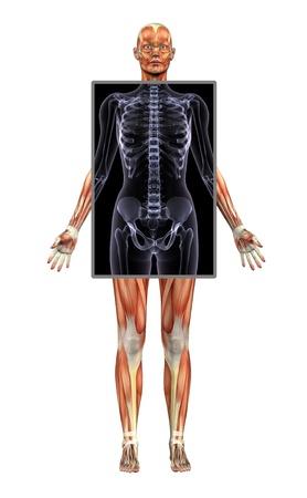 3D rendern, welche die Muskulatur von einer Frau mit einem Röntgenbild des Oberkörpers Region. Standard-Bild - 11711180