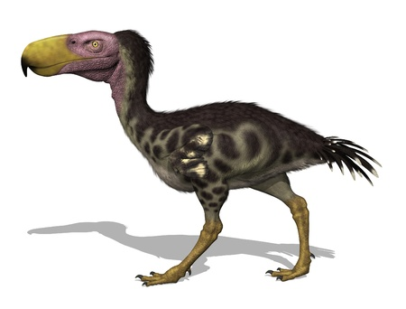 The Kelenken was a giant flightless predatory bird (aka