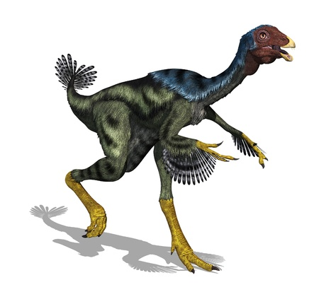 The Caudipteryx was a feathered, bird-like dinosaur that was the size of a peacock and lived during the early Cretaceous Period - 3D render.