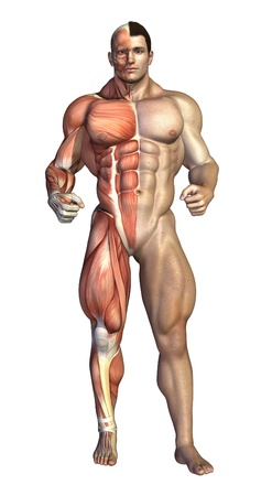 A very muscular man shown with underlying muscle structure on the right - 3D render