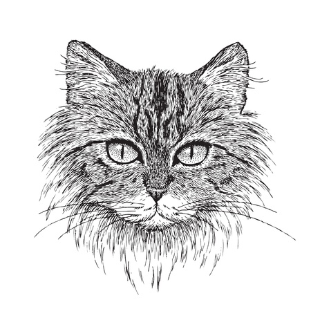 Detailed vector from my pen   ink drawing of a tabby cat