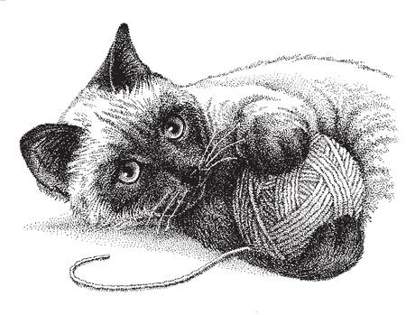 Een siamese kat speelt graag met een bal van garen