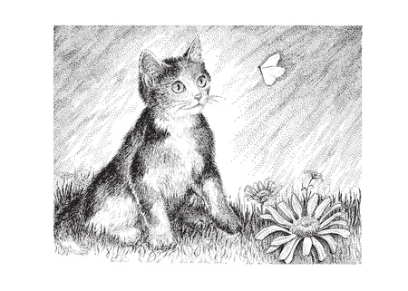 A playful calico kitten chases a butterfly - vector version of my original pen   ink drawing  Ilustração