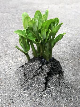 植物は人類の自然の勝利を表すアスファルトを突破します。 写真素材