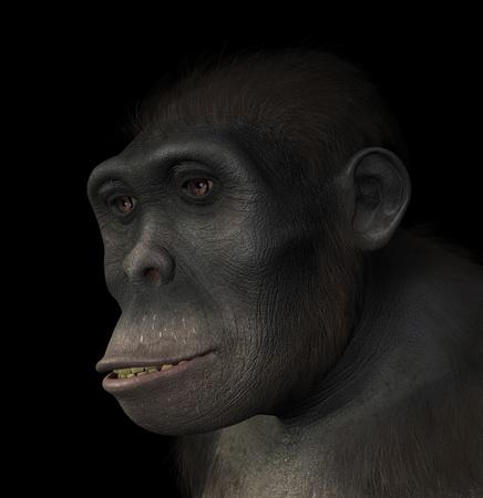 Portret van een Homo habilis, een soort verwant aan de moderne mens en de eerste hominide om hulpmiddelen te gebruiken Homo Habilis bestonden tussen 1 5 en 2 miljoen jaar geleden