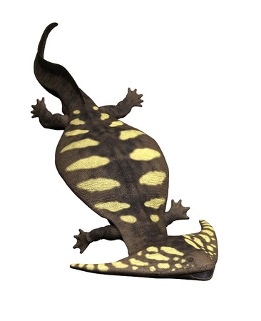 The diplocaulus was a large prehistoric salamander that lived during the Permian Period in North America.