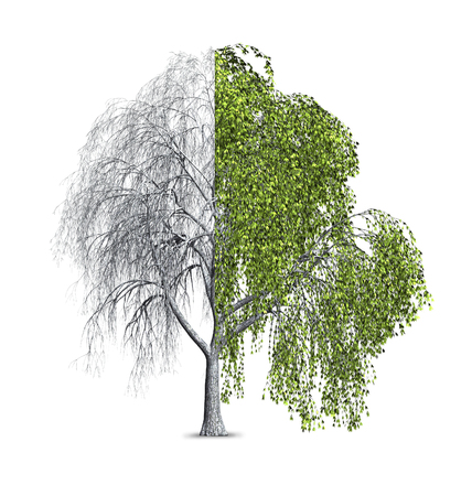 3d render of a willow tree that is shown as half bare, and half with leaves. Stock Photo