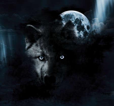 lobo: Oscuro Lobo y Luna Llena Foto de archivo