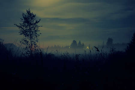 Meadow in the mist at night Stock Photo