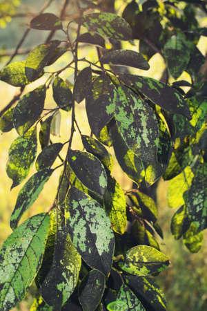 bad leaves Stock Photo