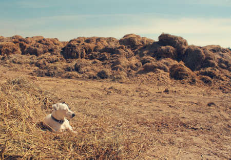 dog on a hay Stock Photo