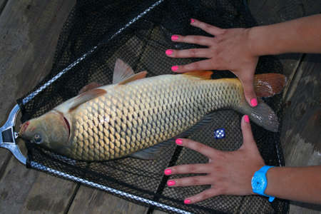fish caught on the pier and the ratio of the size hands to fish