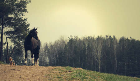 a horse with a small dog standing on a hill,  in a forest