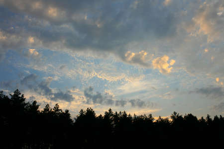 treetops: treetops of black forest, sunset, beautiful sky with clouds