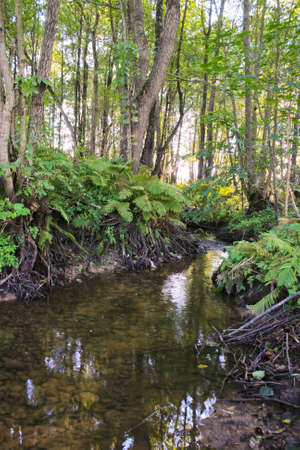 river flows through the trees and many roots with clear water