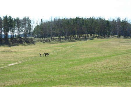 field with a footpath on which are two men with horses photo