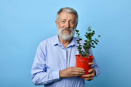 positive kind old bearded man holding flower pot with green plant house and looks at the camera. free time, hobby, spare time