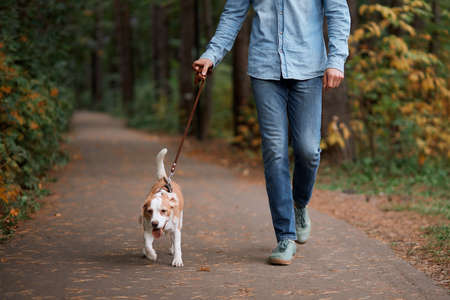 young man walking with his adorable pet, close up cropped photo. lifestyle, free time, spare time Banco de Imagens