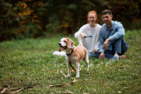 clever dog looking for a stick which has been thrown by man and woman, family taming pet, training it outdoors