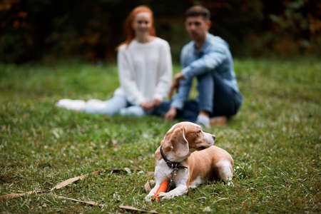 tired dog lying on the grass protecting his owners, blurred backgroundm free time, spare time, daily life