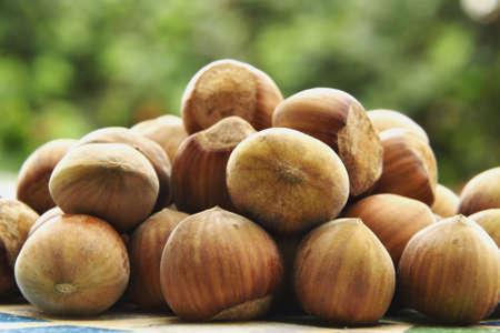 avellanas: Hazelnuts Foto de archivo