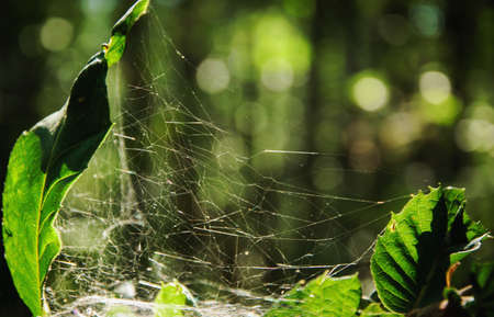 Imperfect perfection of a cobweb hunt for the insects