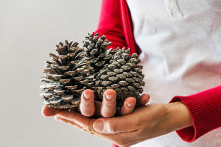 Woman holds pine cones Stock Photo