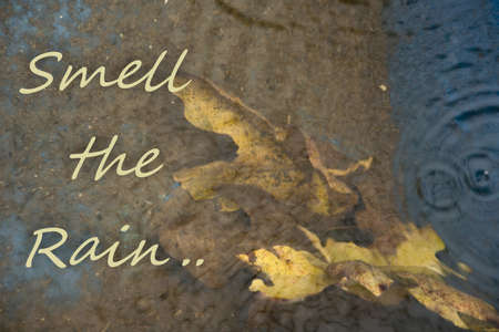 Rainy weather background with text -