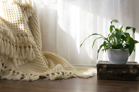 Stylish brightly part of living room with old vintage suitcase, potted plant and woolen handmade blanket on luxury wooden floor. Comfortable place for reading or relaxing in Scandinavian style