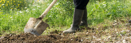 Farmer digging the soil with the shovel, young adult man with rubber boots working in the agricultural field Banque d'images