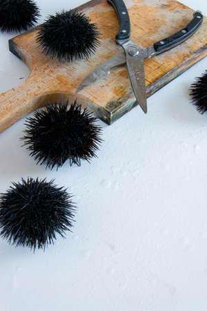 Cooking sea urchins. Seafood ingredients, food background Stock fotó
