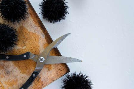 Cooking sea urchins. Seafood ingredients, food background