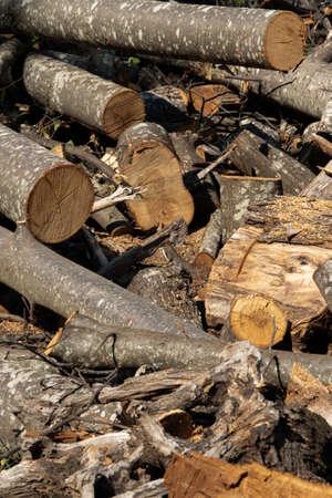 Messy wooden material for fuel. Firewood, deforestation 版權商用圖片