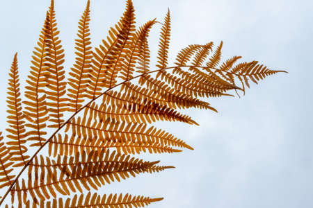 Isolated fern branch. Natural leaf background Standard-Bild