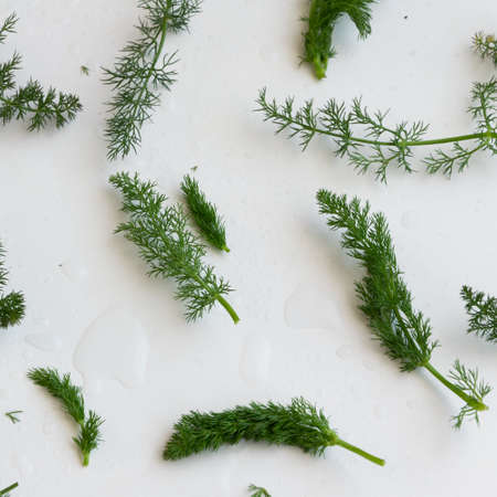 Fennel herb background. Healthy seasoning greenery