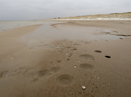 Winter beach on the Curonian Spit in cloudy weather in Lithuania 免版税图像