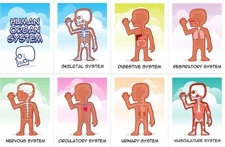 Funny illustrations of human internal organs for kids