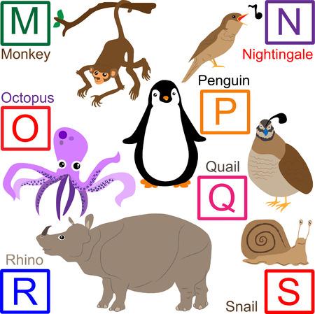 quaglia: Alfabeto degli animali, parte 3 di 4