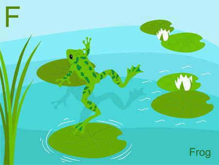 children pond: Animal alphabet flash card, F for frog