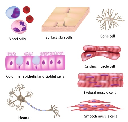 Human cell collection, eps8 Stock Vector - 9273904