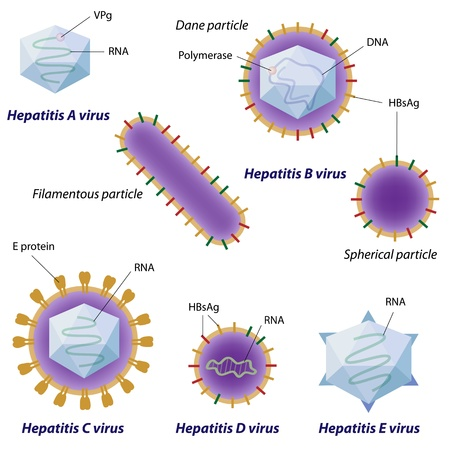 hepatic: Hepatitis viruses comparison Illustration