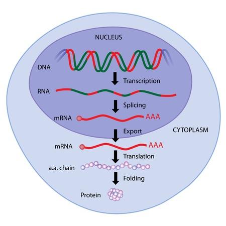 La expresión de genes Ilustración de vector